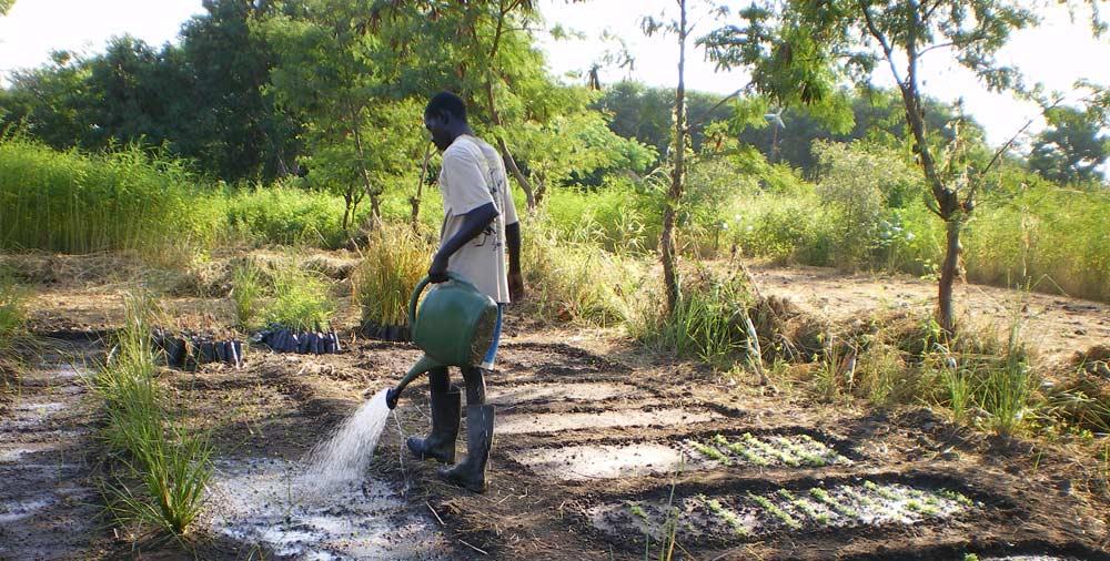 Agroecologie initiée par Pierre Rabhi
