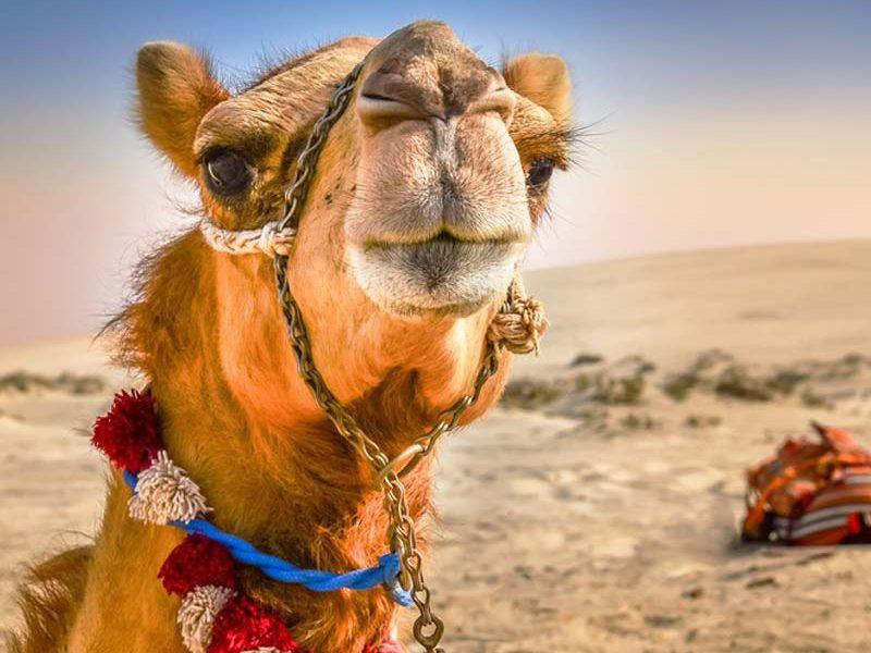 Trek Zarga de Chinguetti a Terjit