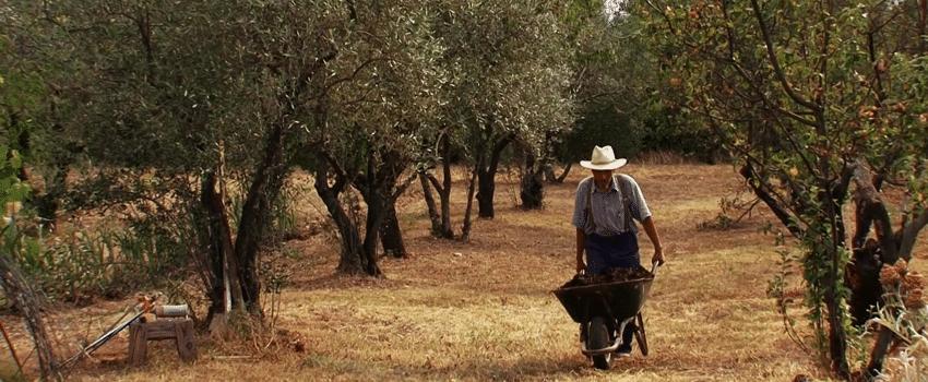 Pierre Rabhi agroécologie