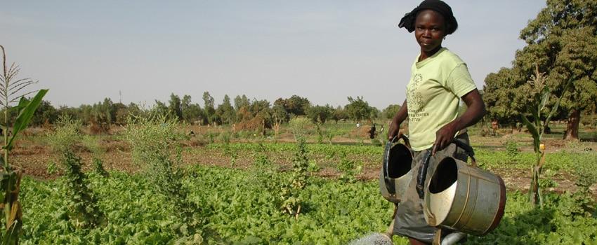 Arrosage d'un champ agroécologique au Burkina Faso