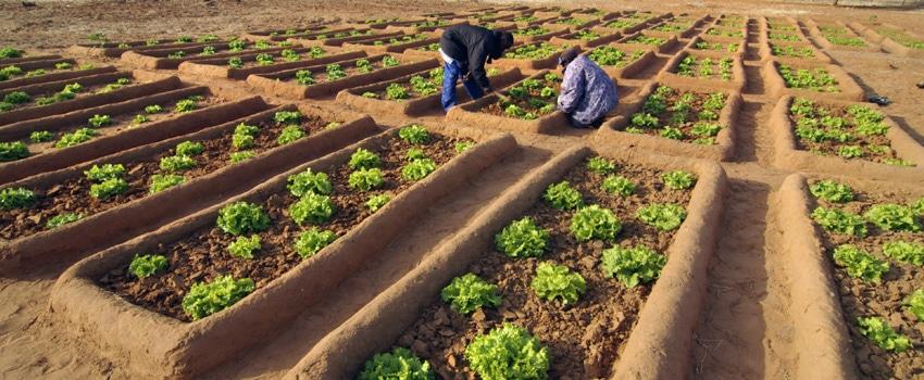 Champ agroécologie au Burkina Faso initié par Pierre Rabhi