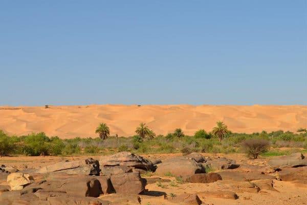 Paysage de la palmeraie de Maaden El Ervane