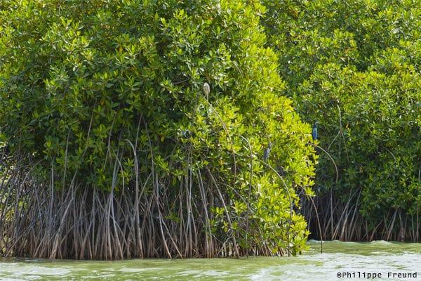 Mangrove Parc Diawling