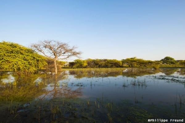 Paysage des marais au Parc national de Diawling