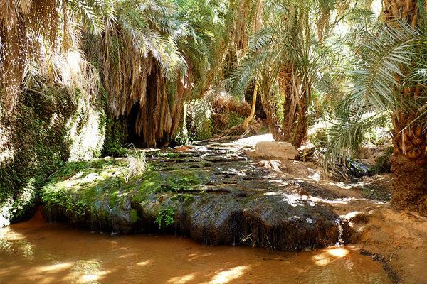 Oasis de Tergit en Mauritanie