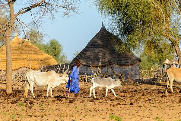 Village peul rive fleuve sénégal