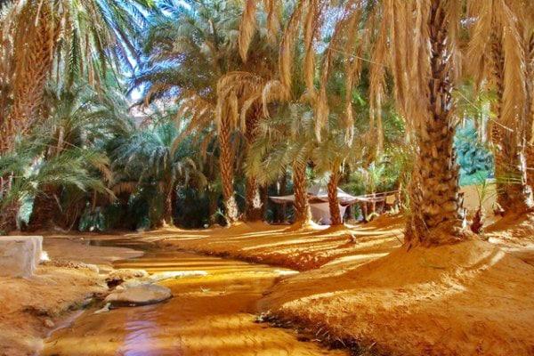 Terjit palmeraie