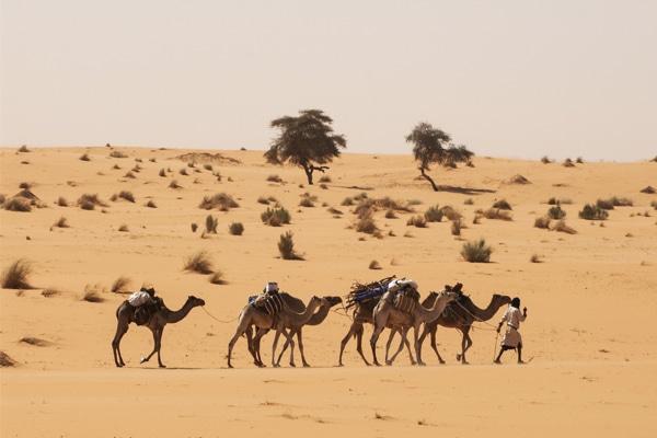 Tagant caravane chameau