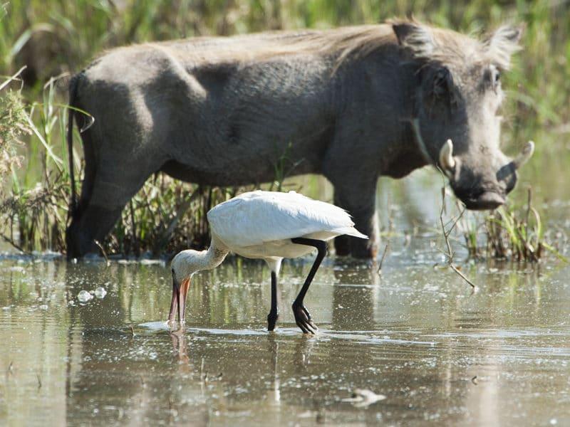 Safari pédestre du Diawling à St Louis du Sénégal