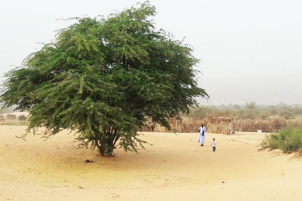 Sous l'acacia de Maaden
