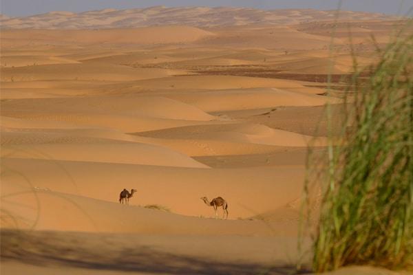 Dunes erg ouarane et 2 chameaux