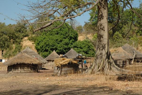 Circuit pays Bassari & parc Niokolo Koba